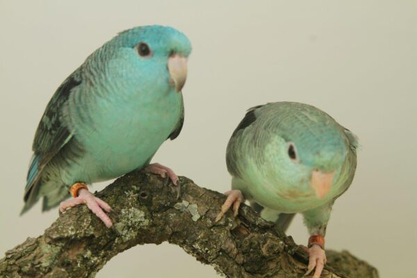 IMG_4660 links-turquoise, rechts-EF Misty truquoise